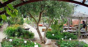 Check out how school gardens are succeeding in Santa Cruz! Sign up for the Santa...