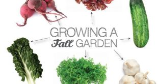 how to grow your own foods this Fall. Blog-PURE MAMAS
