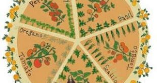 """Pizza Garden"" - I love the book ""Roots, Shoots, Buckets and Boots"" by Sharon Lo..."