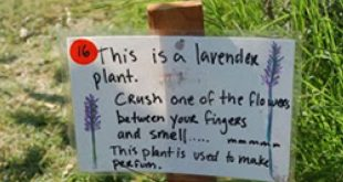 Resources | The Edible Schoolyard Project