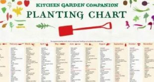 Whenever I want to know what I can plant this month I often find I madly flip th...